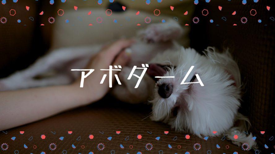 AVODERM(アボ・ダーム)をヨークシャーテリアが体験!